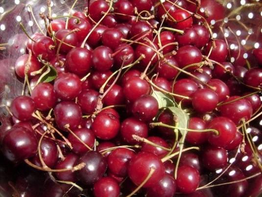 Visine-fructe-revigorante-vara-2-550x415
