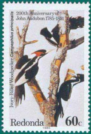 Redonda-1985-Audubon-1