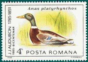 Romania-1985-Audubon-6