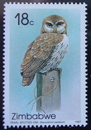 stamp_pearl_spotted_owl