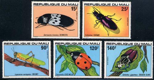 mali_07_insect