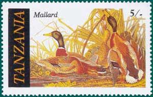 Tanzania-1986-Audubon-1