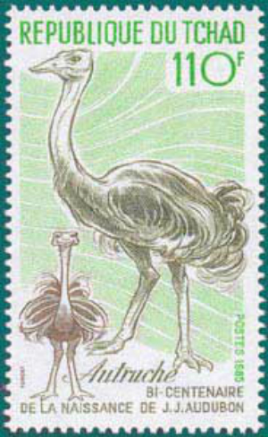 Tchad-1985-Audubon-2