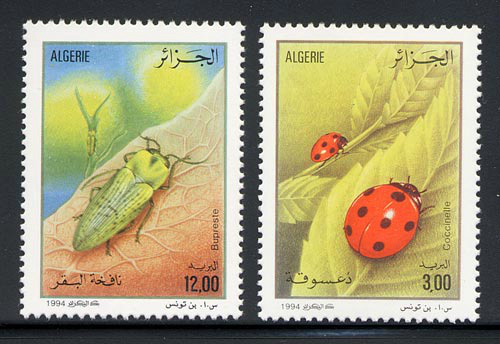 algeria_08_beetles_1023-4