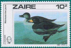 Zaire-1985-Audubon-2