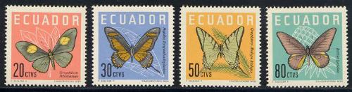 ecuador_01_bfly_680-83