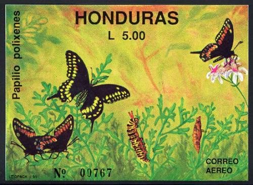 honduras_01_bfly-moth-ss