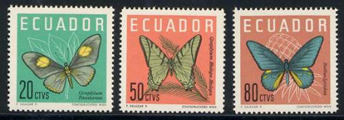 ecuador_03_bfly_711-13