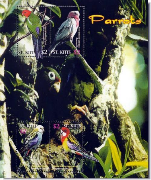 stk0505sh-wild4parrots
