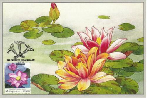 lotus12