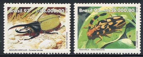 brazil_17_beetles_2408-9