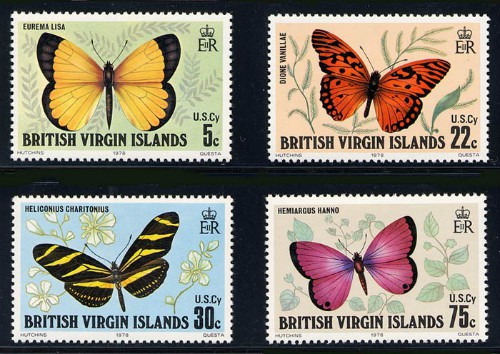 british_virgin_islands_01_butterflies_342-5