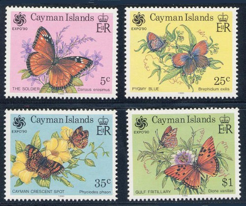 cayman-is_06_bfly_624-7