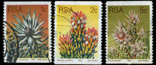 rsa-protea-coil-stamps
