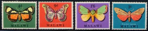 malawi_04_moth