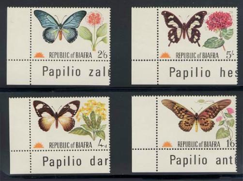 biafra_01_butterflies_m22-5